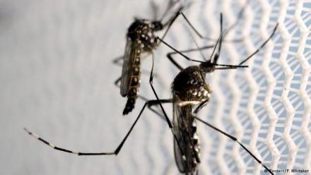 zika dengue.jpg