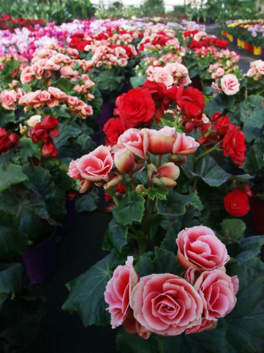 Escuela de jardineria4.jpg