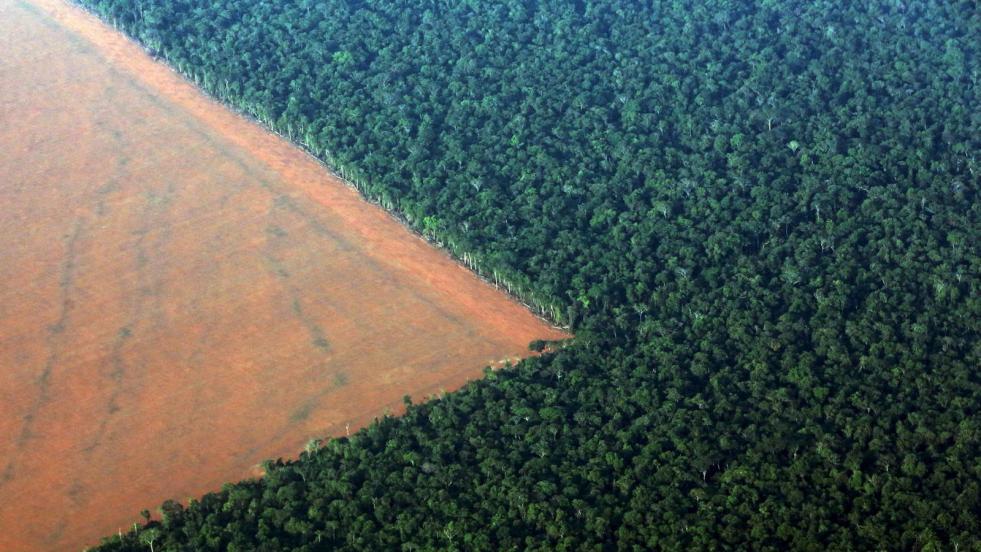 gano-bolsonaro-pierde-la-amazonia-todo-lo-que-esta-victoria-implica-para-el-planeta.jpg