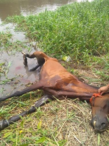 caballo muerto 3.jpg