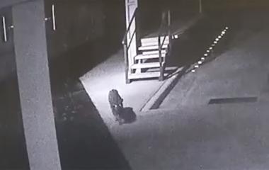Cataratas: empleado se encontró cara a cara con un yaguareté