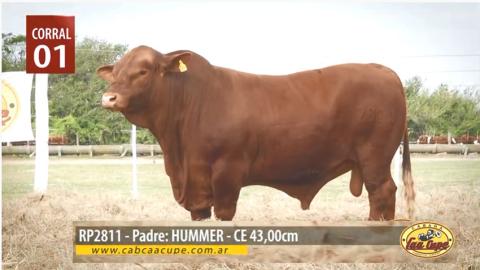 RP2811-padre-Hummer.jpg