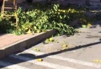 Vecina se queja de la falta de funcionamiento del 0800 municipal