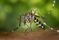 40 casos de zika confirmados en Chaco y nuevos casos probables de dengue