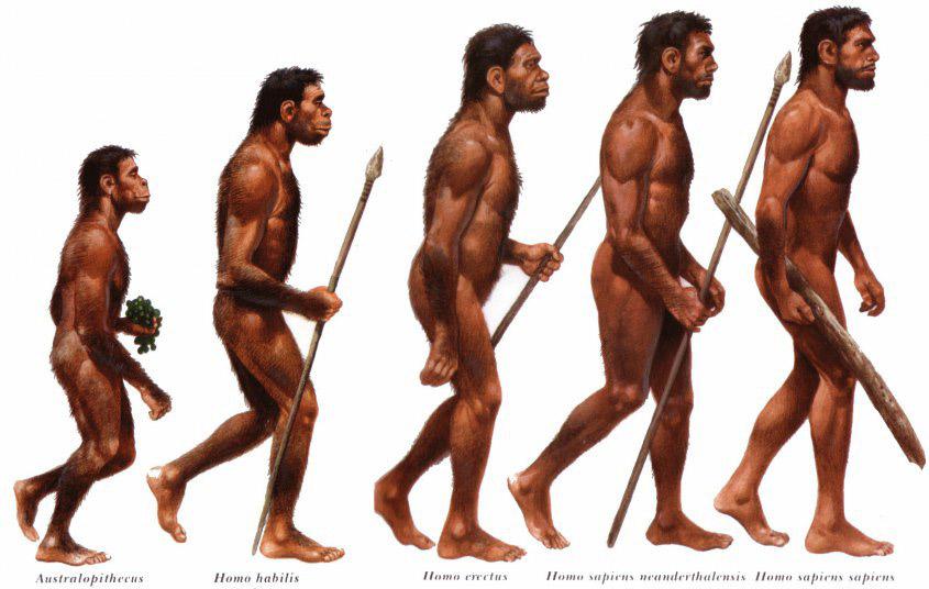 evolu.jpg