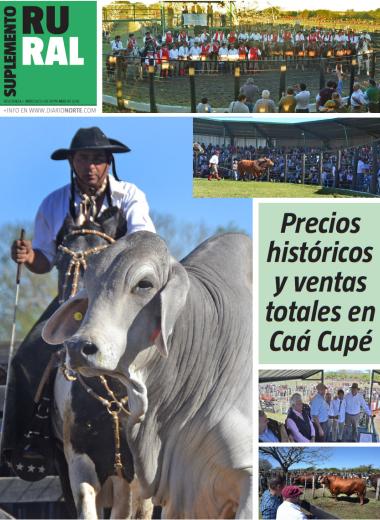 Precios históricos y ventas totales en Caá Cupé