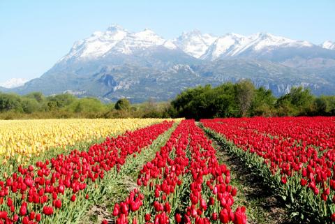 Campo-de-Tulipanes-03.jpg