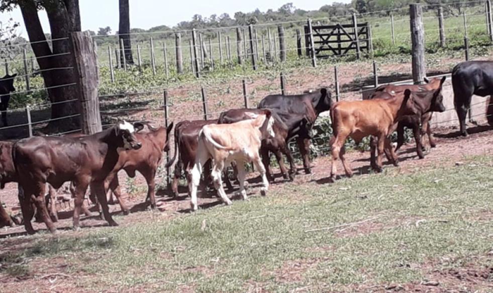 La falta de lluvias pone en jaque a los cultivos y a la ganadería