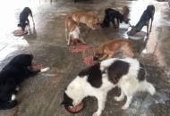 Huellas Caninas hace un urgente pedido de solidaridad
