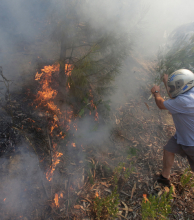 El fuego en Portugal avanza hacia el norte: ya causó 64 muertos,