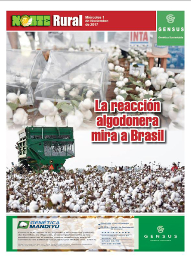 La reacción algodonera mira a Brasil
