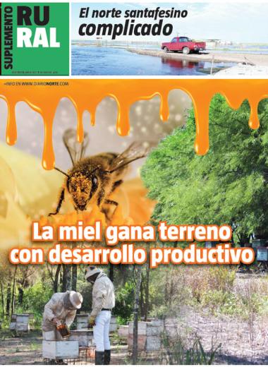 La miel gana terreno con desarrollo productivo