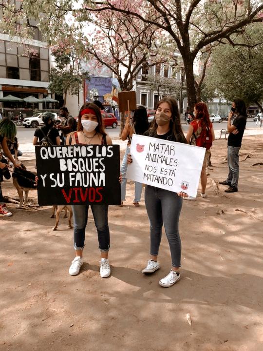 Chaco Animal Save.jpg