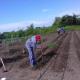 Las huertas comunitarias iniciaron la siembra después de meses sin producir