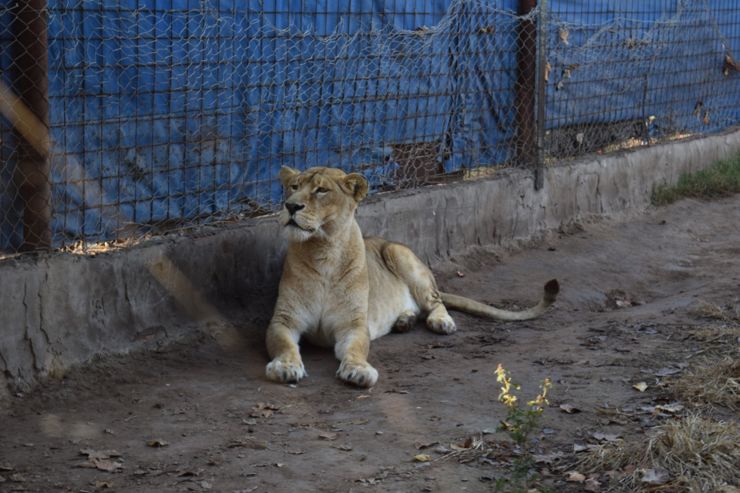 leon rescatado.jfif