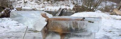 La foto de un zorro congelado, símbolo del fuerte temporal que sufre Alemania