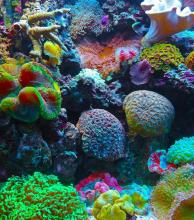 Científicos descubrieron un nuevo arrecife de coral frente a Brasil, donde era 'impensable' encontrarlo