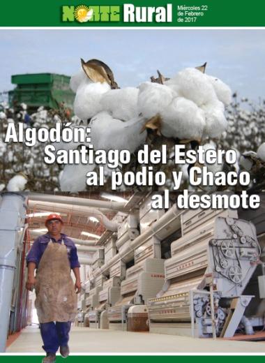 Algodón: Santiago del Estero al podio y Chaco al desmote