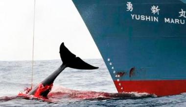 Japon ballenas.jpeg