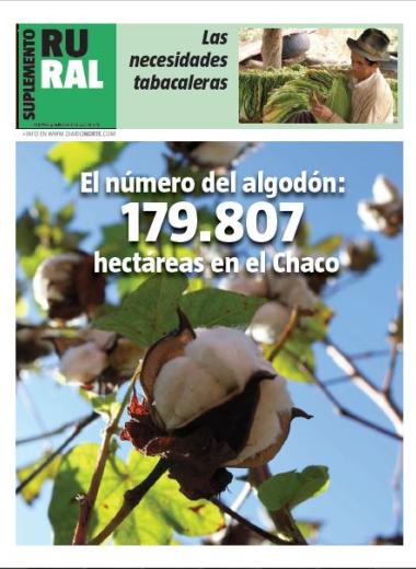 El número del algodón: 179.807 hectáreas del Chaco