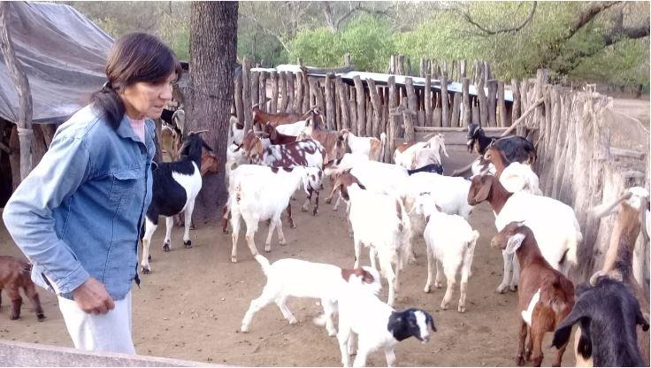 Cabras para Todos.JPG