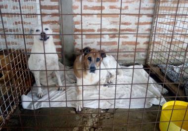 Huellas Caninas sigue proponiendo acciones para sostener el hogar de perros