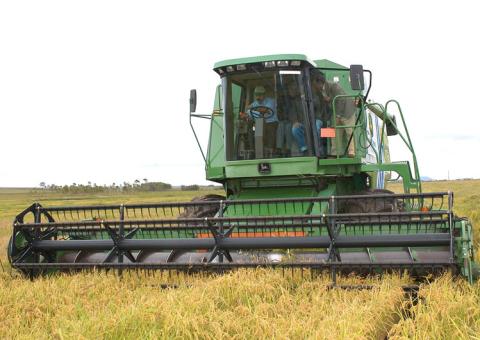 cosechar-arroz.jpg