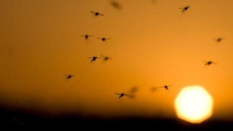 dengue2.jpg