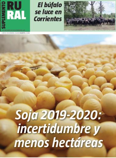 Soja 2019-2020: incertidumbre y menos hectáreas