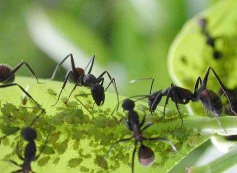 hormigas 2.jpg
