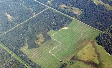 bosques nativos.jpg