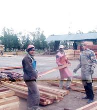 El gobierno anunció medidas para reactivar el sector forestal