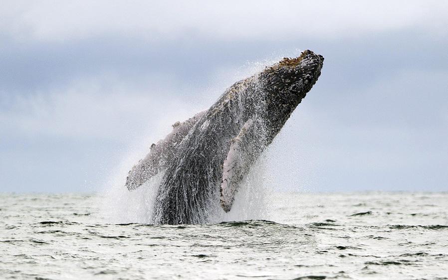 pacifico-ballena.jpg