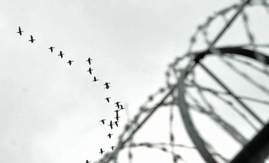 libertad 2.jpg