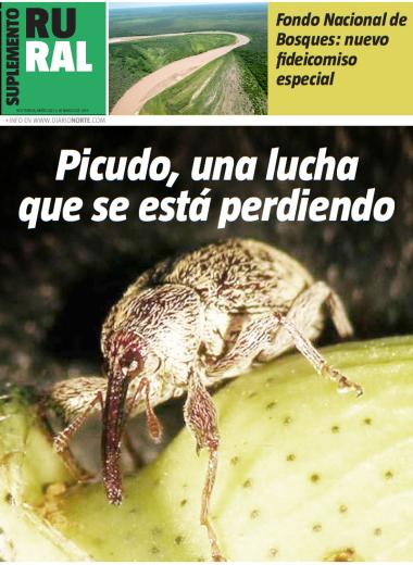 Picudo, una lucha que se está perdiendo