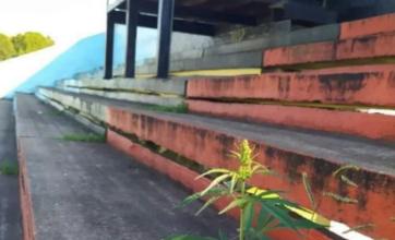 Tras dos meses sin fútbol creció una planta de marihuana en la tribuna