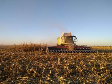 58cosecha maíz.jpeg