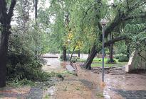 Debido a la sobrecarga de humedad en los suelos solicitan que se evite circular cerca de árboles