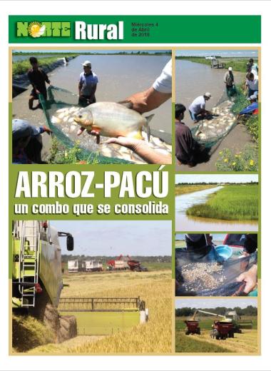 Arroz-Pacú, un combo que se consolida