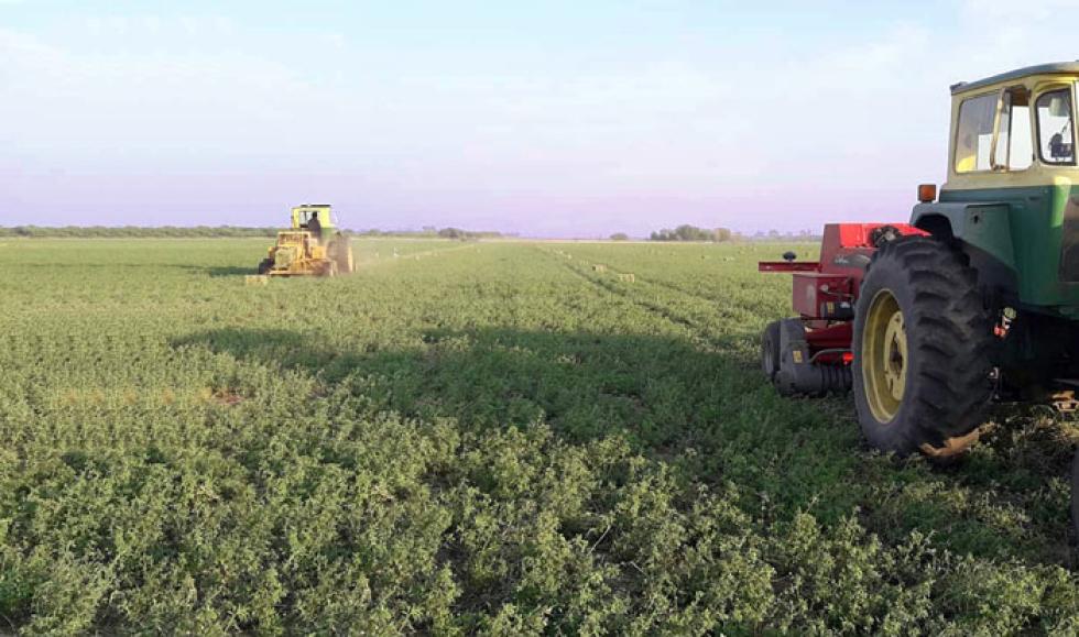 Alfalfa-quieren-exportar.jpg
