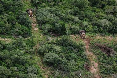 bosque nativo.jpg