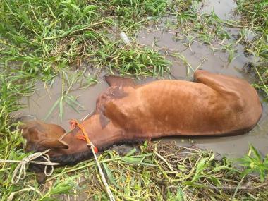caballo muerto 4.jpg