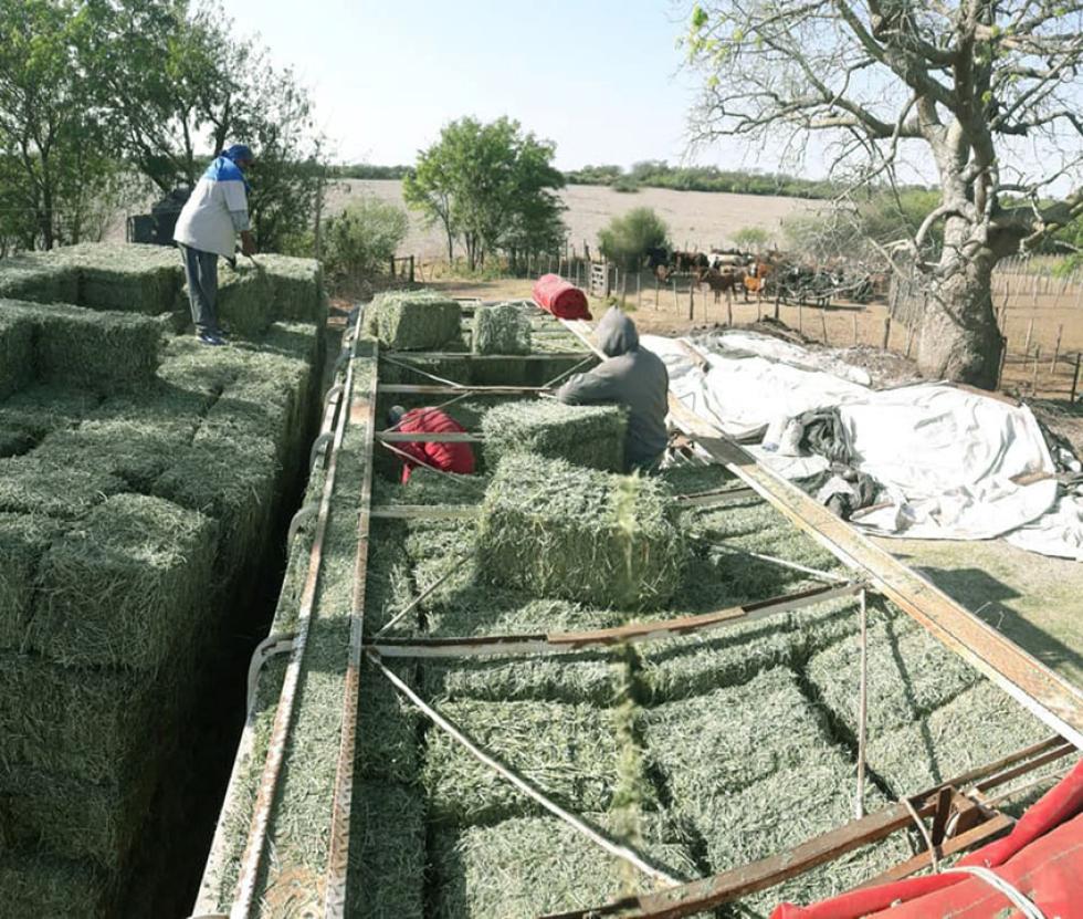 alfalfa-fardos.jpg