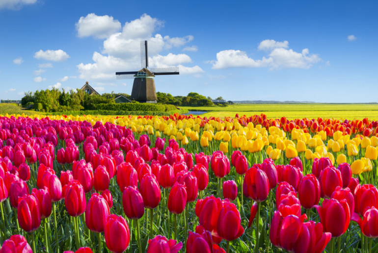 tulipanes01.jpg