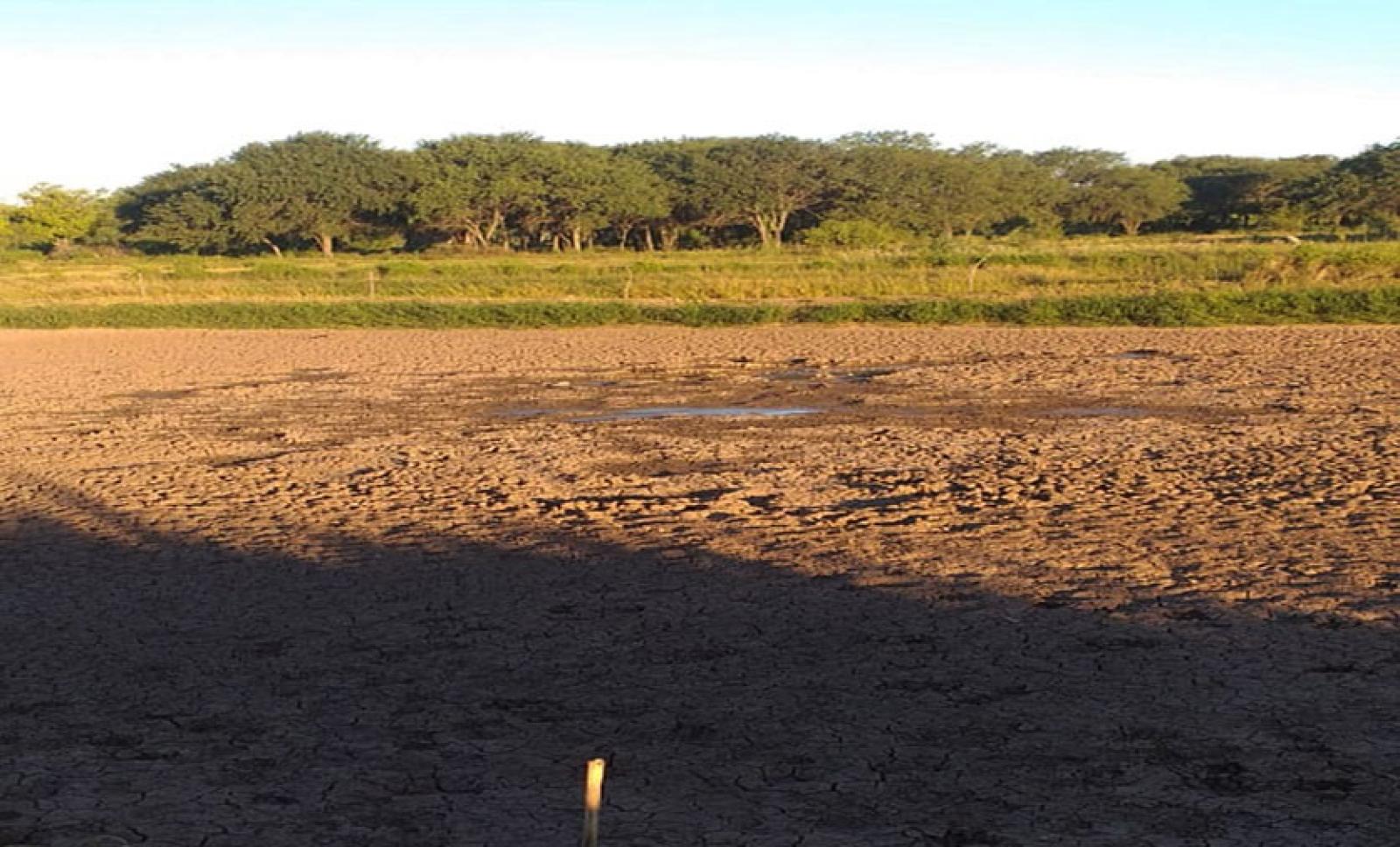 La sequía comienza a golpear a la producción primaria