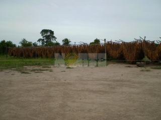 cosecha tabaco.jpg