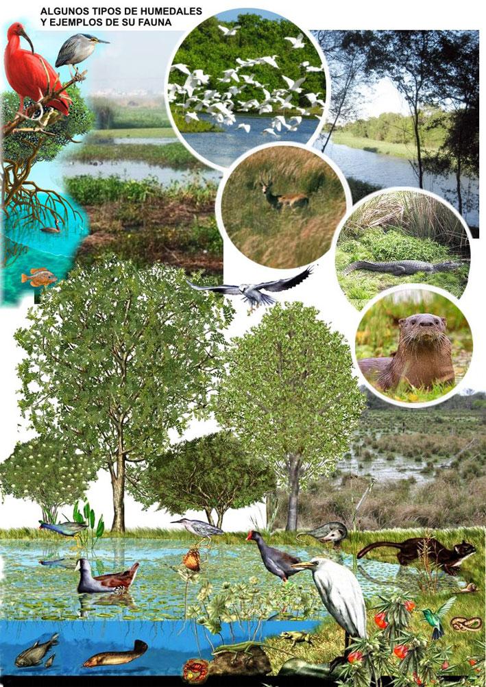 Flora Y Fauna De Los Humedales Norte Chaco