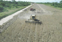 Casi 2 millones de toneladas de soja se cosecharon en la última campaña en el Chaco