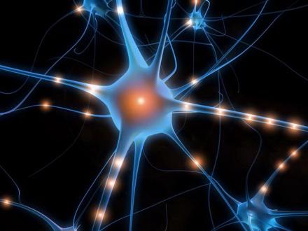 neuronas.jpg