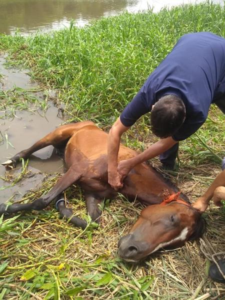 caballo muerto 1.jpg